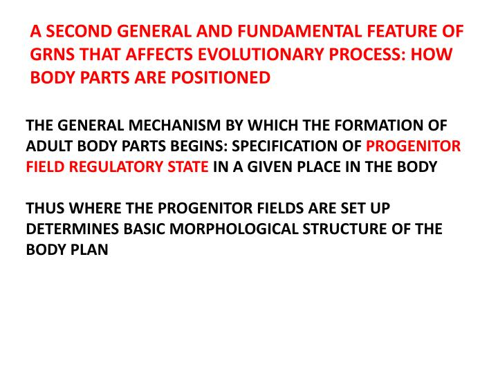 A SECOND GENERAL AND FUNDAMENTAL FEATURE OF GRNS THAT AFFECTS EVOLUTIONARY PROCESS: HOW BODY PARTS ARE POSITIONED
