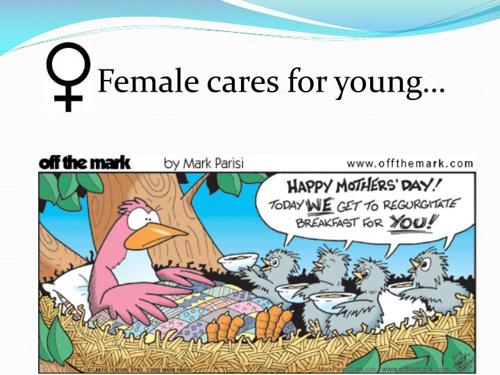 Female cares for young…