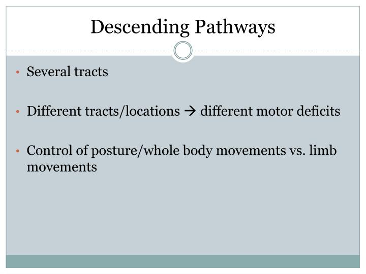 Descending Pathways
