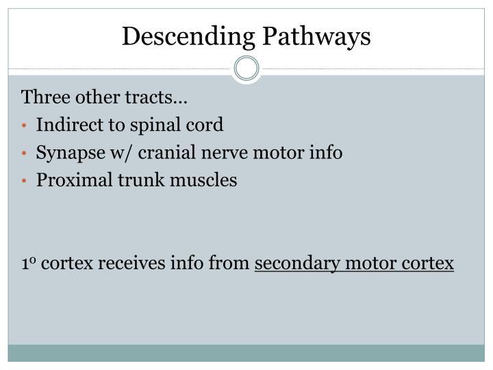 Descending Pathways