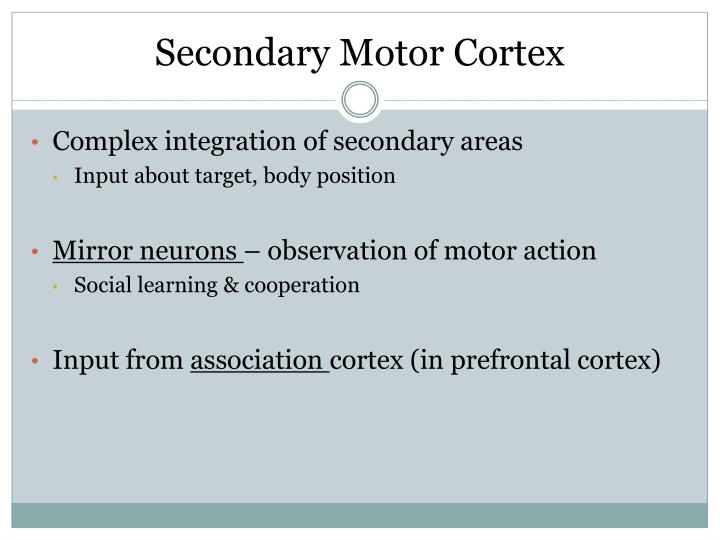 Secondary Motor Cortex