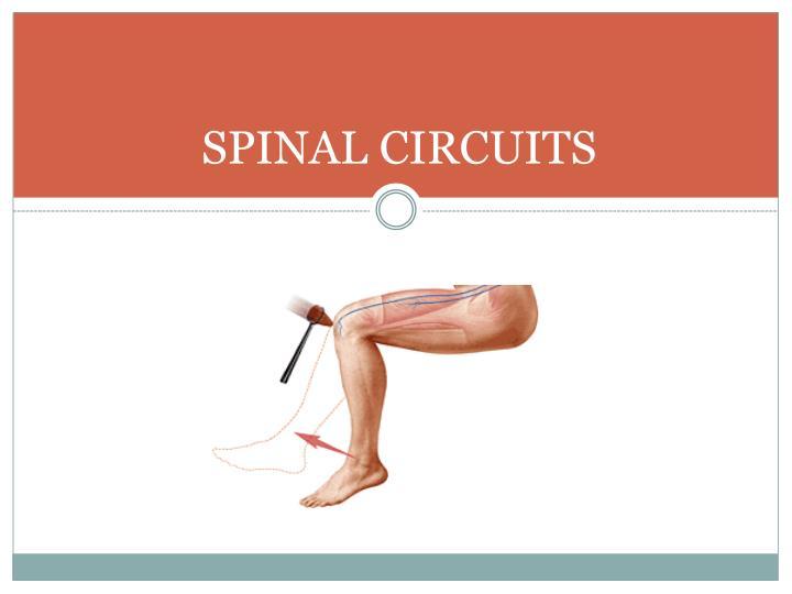 SPINAL CIRCUITS