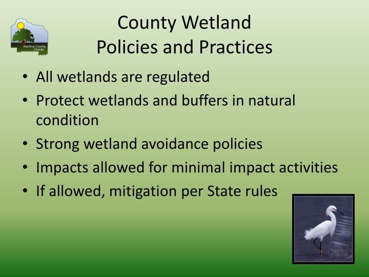 County Wetland