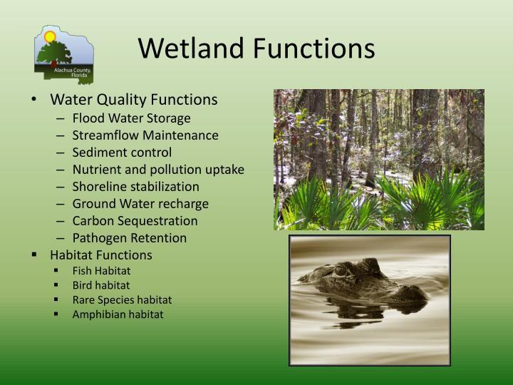 Wetland Functions