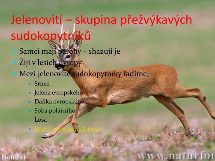Jelenovití – skupina přežvýkavých sudokopytníků
