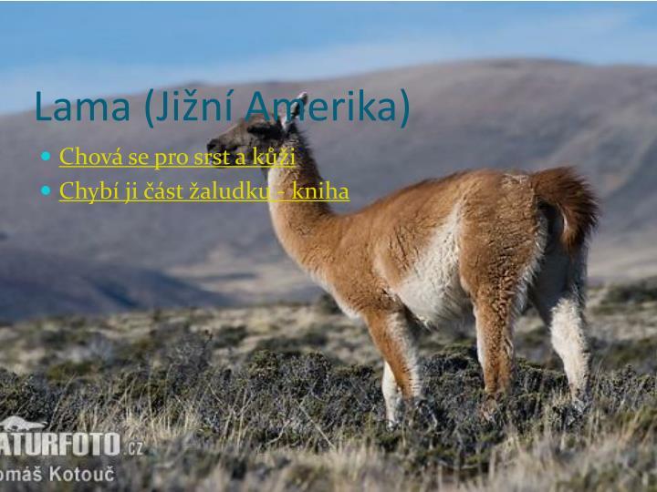 Lama (Jižní Amerika)