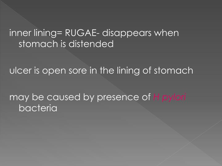 inner lining= RUGAE- disappears when stomach is distended