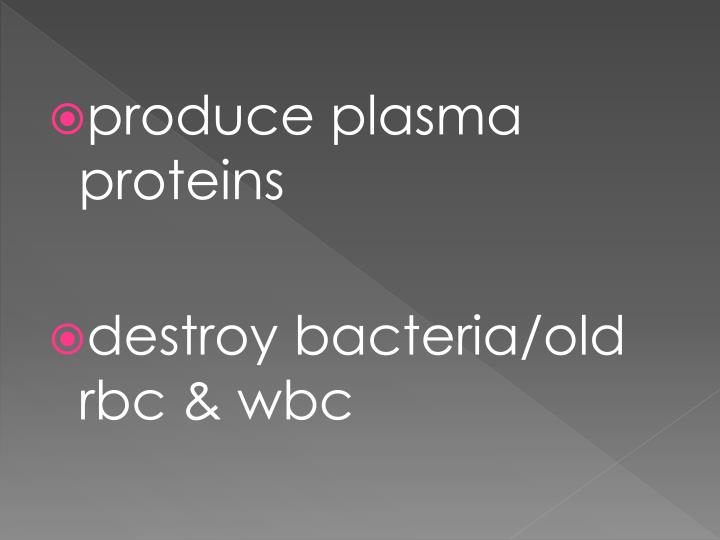 produce plasma proteins