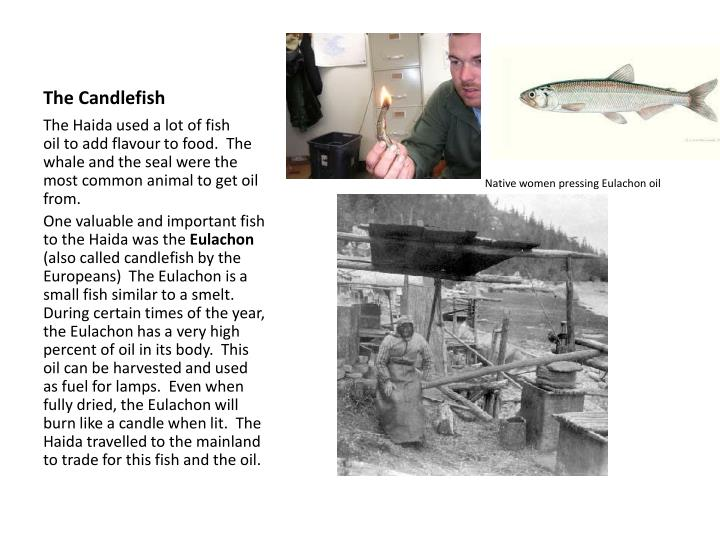 The Candlefish