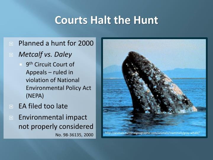Courts Halt the Hunt