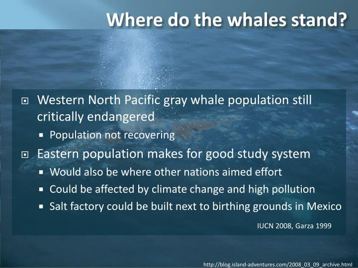 Where do the whales stand?