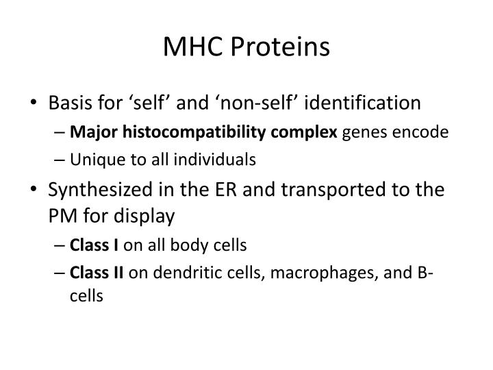 MHC Proteins