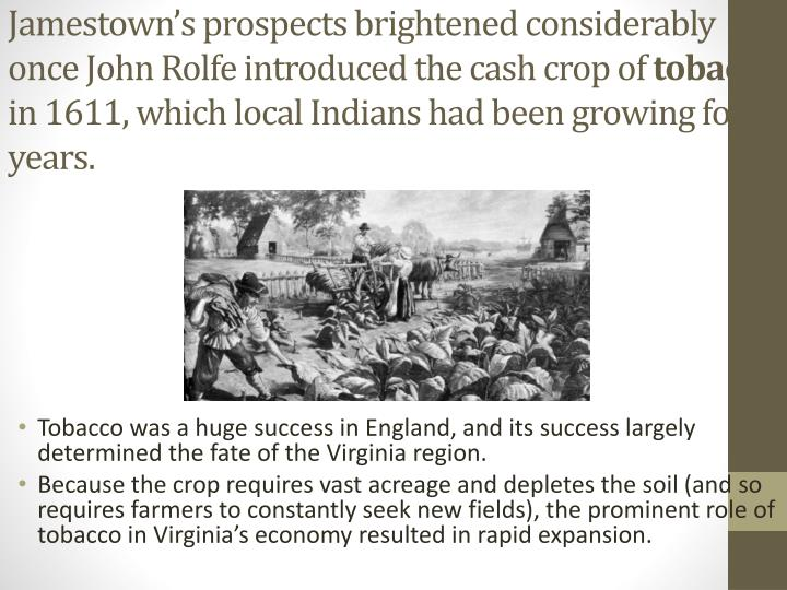 Jamestown's prospects brightened considerably once John Rolfe introduced the cash crop of