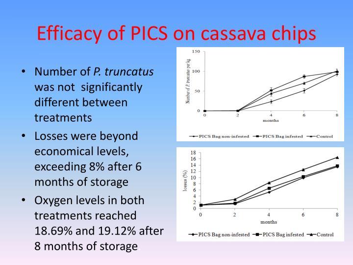 Efficacy of PICS on cassava chips