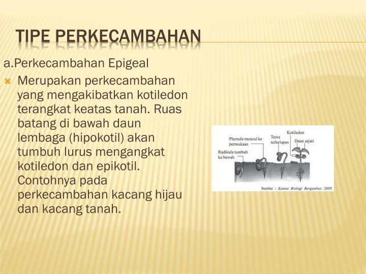 TIPE PERKECAMBAHAN