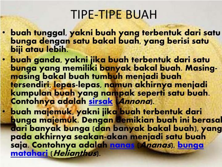 TIPE-TIPE BUAH