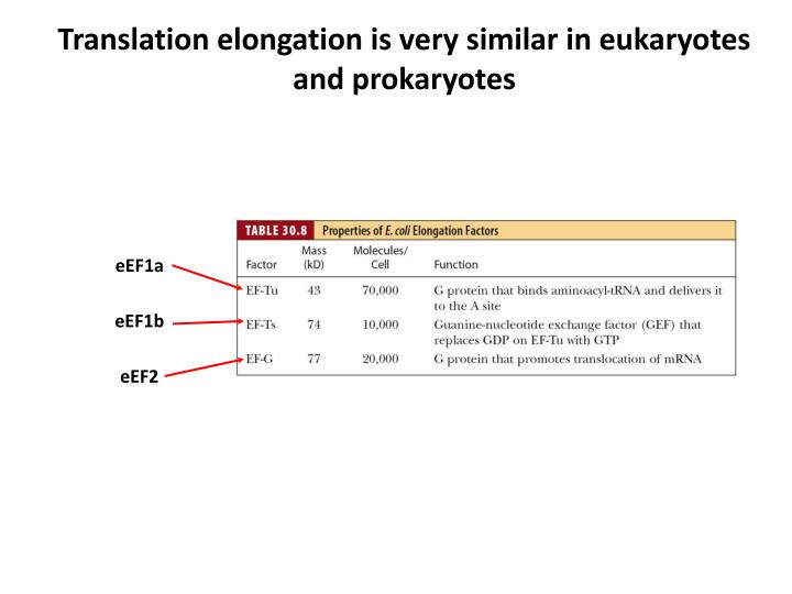 Translation elongation is very similar in eukaryotes and prokaryotes
