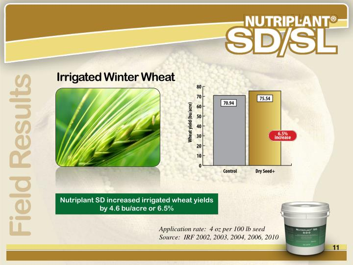Irrigated Winter Wheat