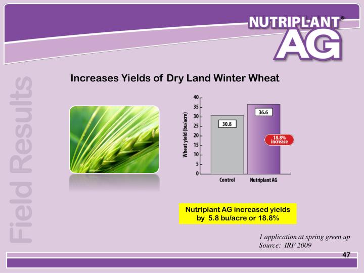 Increases Yields of Dry Land Winter Wheat