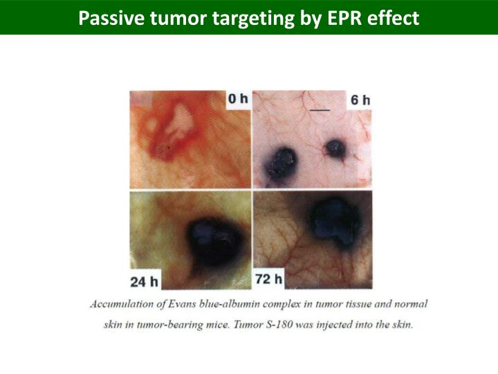Passive tumor targeting by EPR effect
