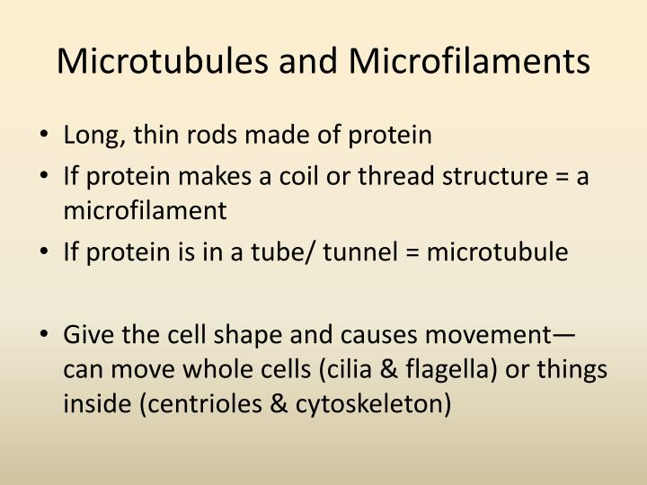 Microtubules and Microfilaments
