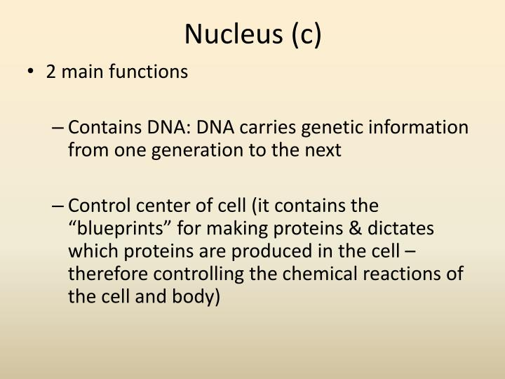 Nucleus (c)