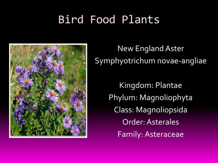 Bird Food Plants