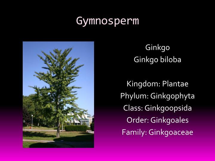 Gymnosperm