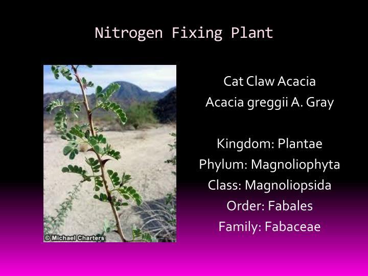 Nitrogen Fixing Plant