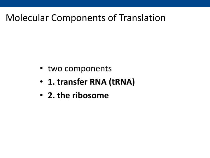 Molecular Components of Translation