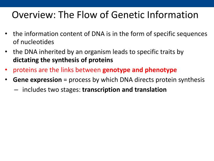 Overview the flow of genetic information