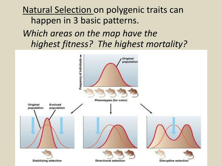 Patterns Of Natural Selection On Polygenic Traits