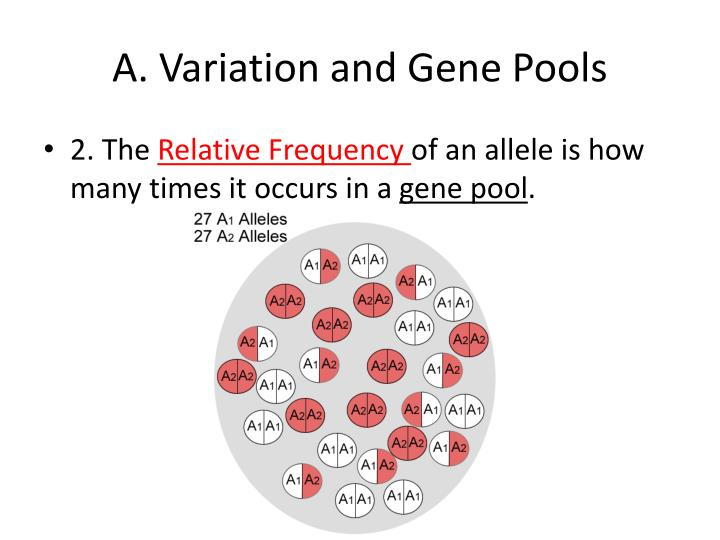 A variation and gene pools1