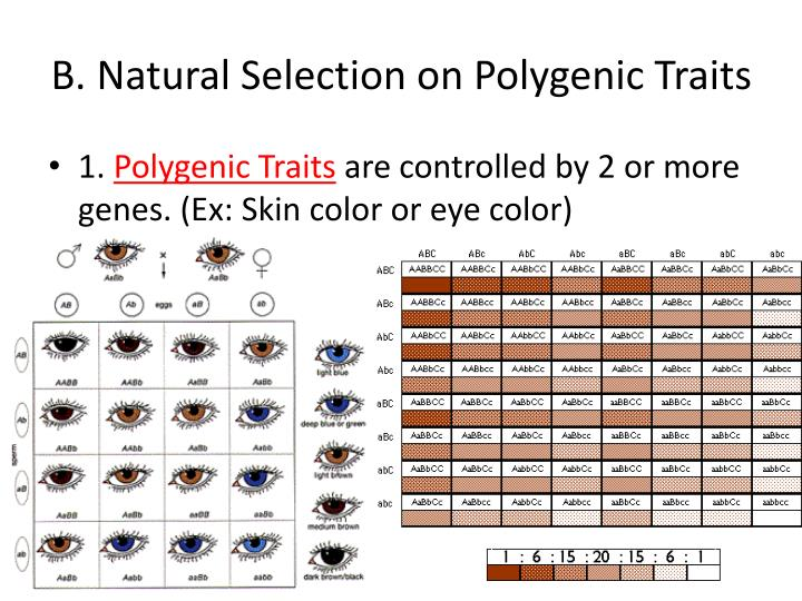 B. Natural Selection on Polygenic Traits