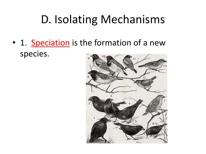 D. Isolating Mechanisms