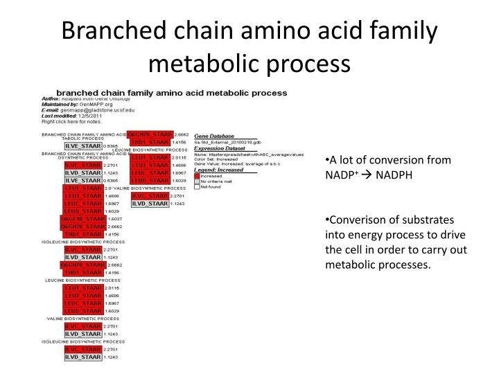 Branched chain amino acid family metabolic process