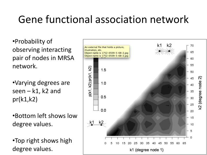 Gene functional association network