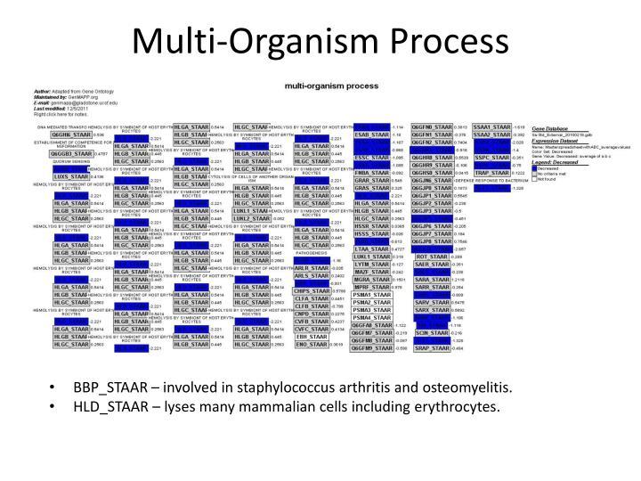 Multi-Organism Process