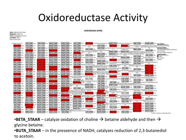 Oxidoreductase