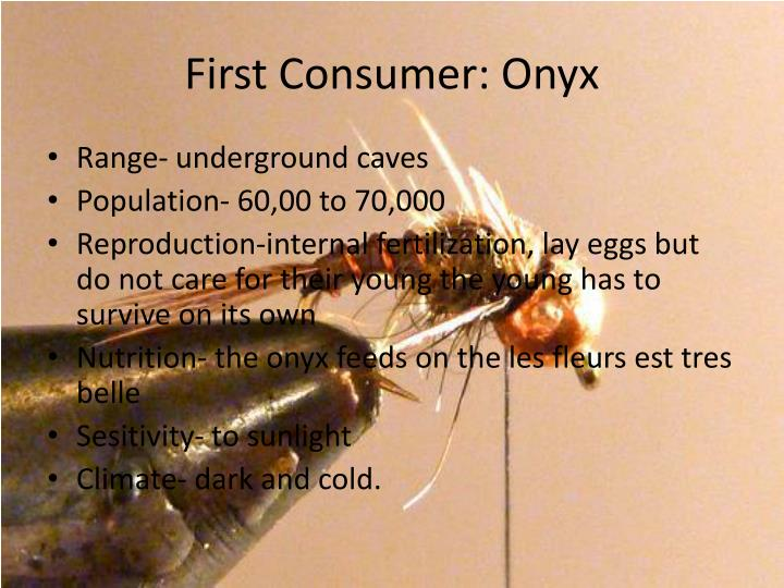 First Consumer: Onyx