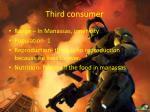 third consumer