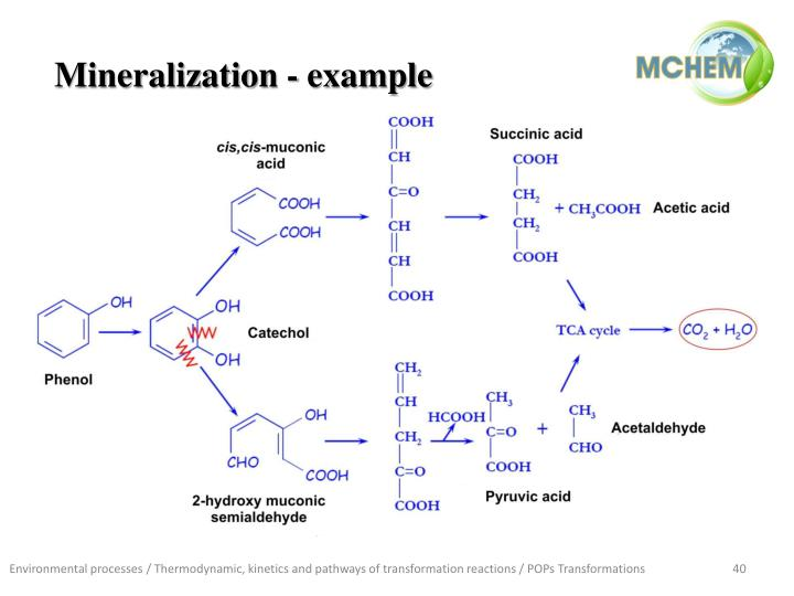 Mineralization - example