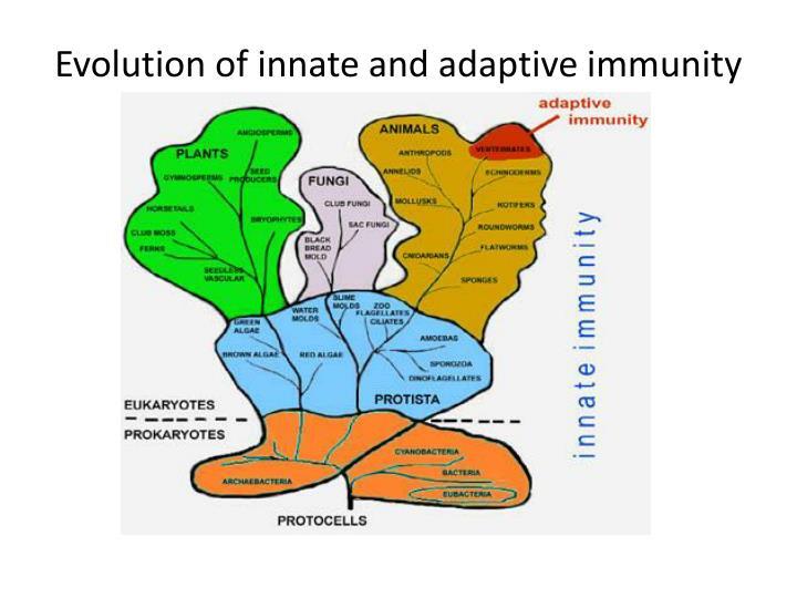 Evolution of innate and adaptive immunity