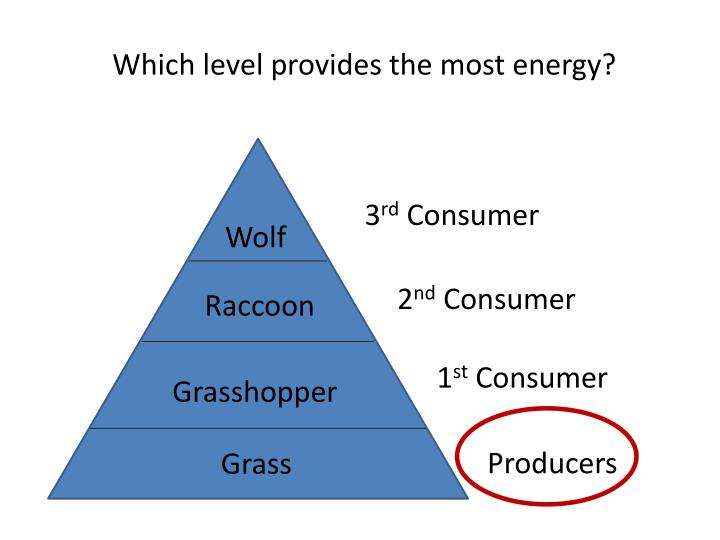 Which level provides the most energy?