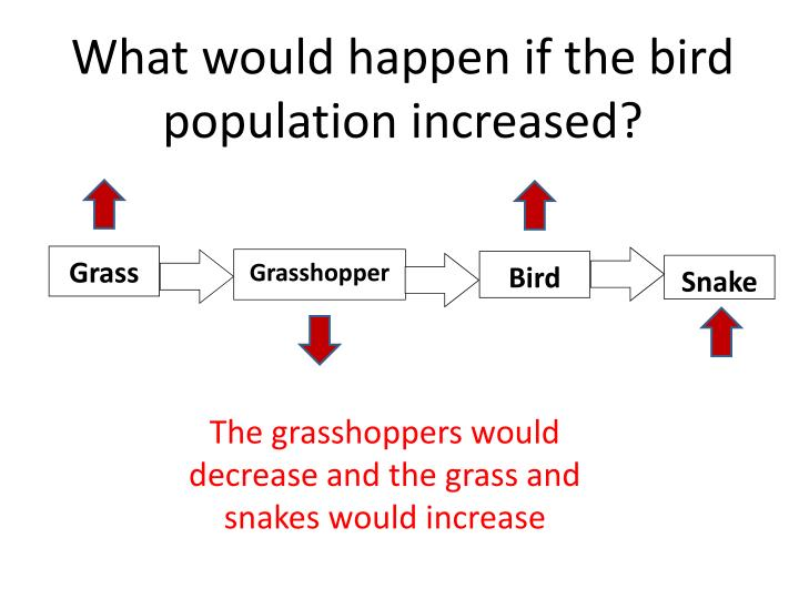 What would happen if the bird population increased?
