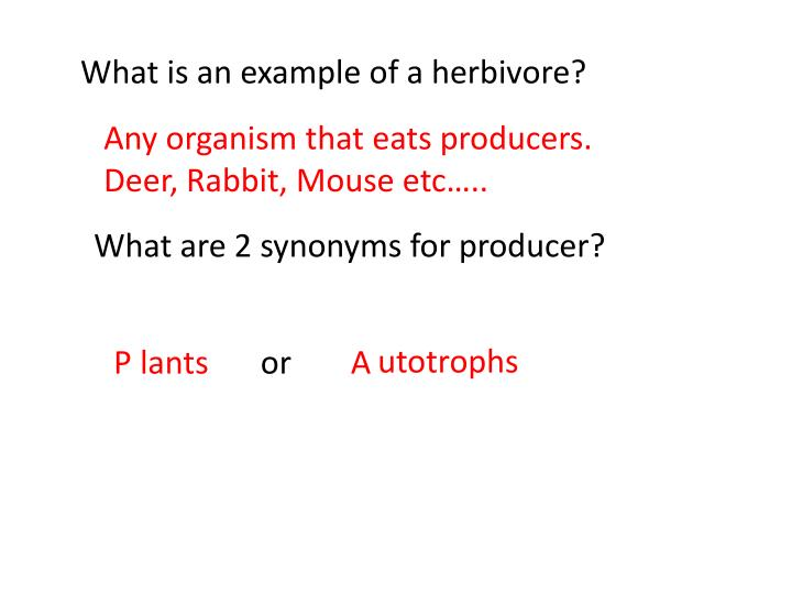 What is an example of a herbivore?