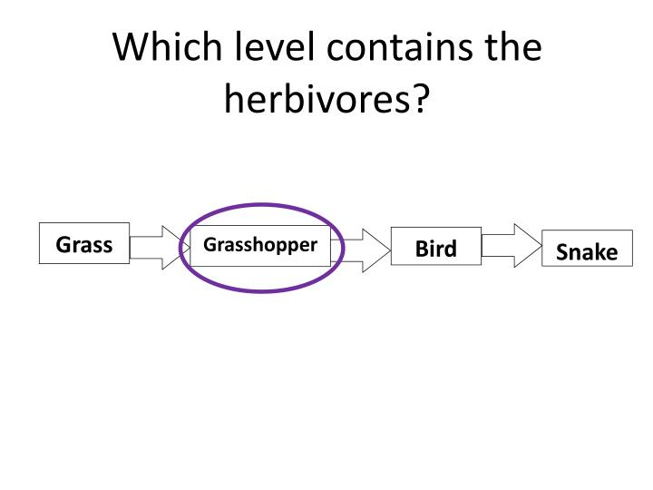 Which level contains the herbivores?