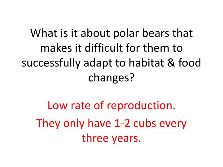 What is it about polar bears that makes it difficult for them to successfully adapt to habitat & food changes?