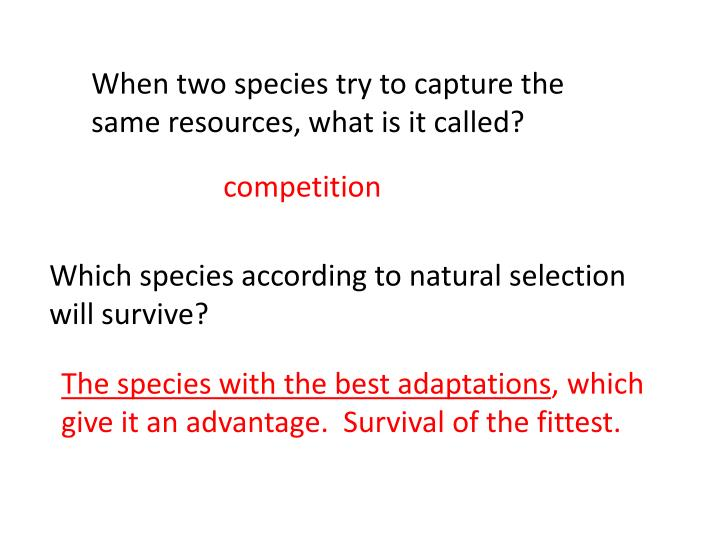 When two species try to capture the same resources, what is it called?