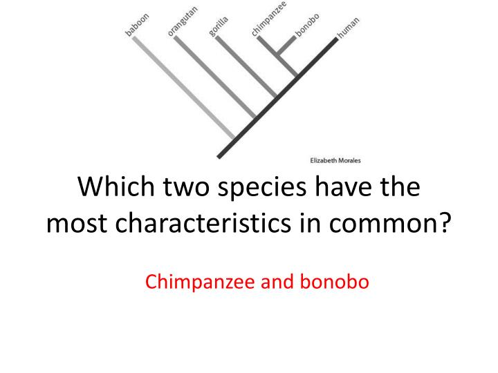 Which two species have the most characteristics in common?